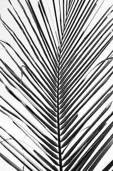 Красивая тропическая ветвь кокосовой пальмы против белого неба. минималистичный узор и черный и белый цвета