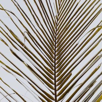 Красивая тропическая ветвь кокосовой пальмы против белого неба. минималистичный узор и теплые цвета ретро и винтаж