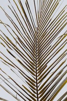 白い空を背景に美しい熱帯のココナッツ椰子の枝。ミニマルなパターンとレトロとヴィンテージの温かみのある色