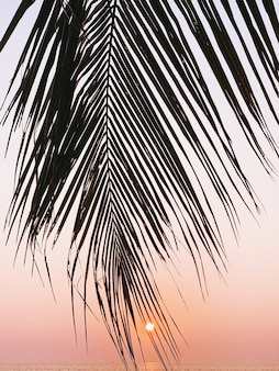 Beautiful tropical coconut palm branch on colorful sunset with bright yellow sun and sea
