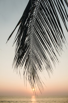 Beautiful tropical coconut palm branch on colorful sunset with sun and sea
