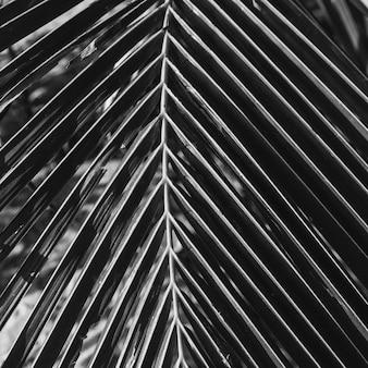 Красивая тропическая ветвь кокосовой пальмы. минималистичный узор и принт в черно-белых тонах