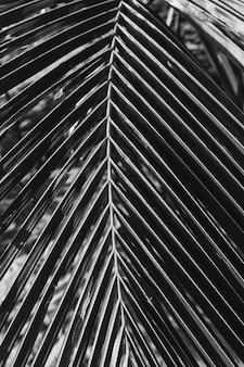 아름다운 열대 코코넛 야자 지점. 미니멀리즘 패턴 및 흑백 인쇄