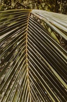 美しい熱帯のココナッツ椰子の枝。ミニマルなパターンとレトロなヴィンテージグリーンカラーのプリント