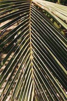 Красивая тропическая ветвь кокосовой пальмы. минималистичный узор и зеленые цвета
