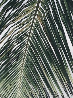 아름다운 열대 코코넛 야자 지점. 미니멀리즘 패턴과 레트로 빈티지 그린 컬러 필터