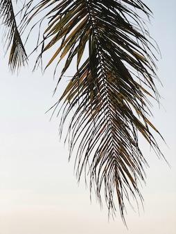 Красивая тропическая ветвь кокосовой пальмы. минималистичный узор и теплые цвета ретро и винтаж