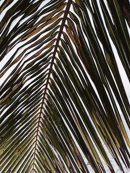 美しい熱帯のココナッツ椰子の枝。ミニマルなパターンとレトロとヴィンテージの温かみのある色