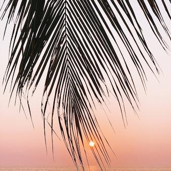 밝은 노란색 태양과 바다와 화려한 일몰에 아름 다운 열 대 코코넛 야 자 지점