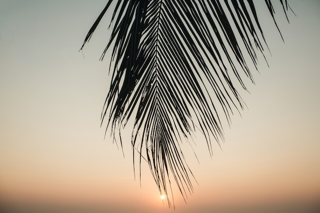 Beautiful tropical coconut palm branch with colorful sunset