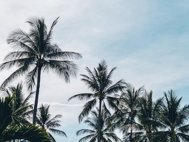 Beautiful tropical coconut palm tree on blue sky