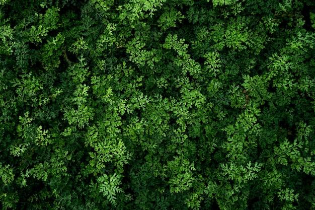 Красивые тропические кустарники папоротника для свежести естественного дизайна фона.