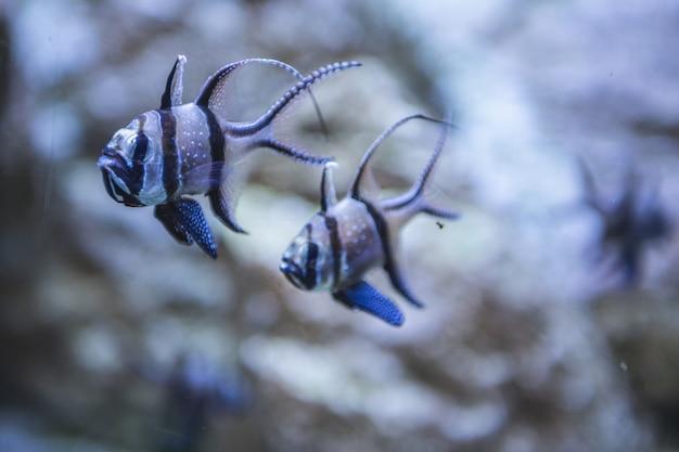 Beautiful tropical fish of salt water colors in aquariums