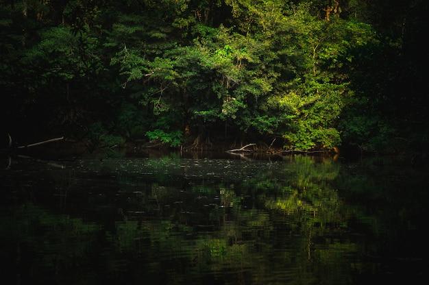木々の間から輝く太陽が輝く美しい熱帯林