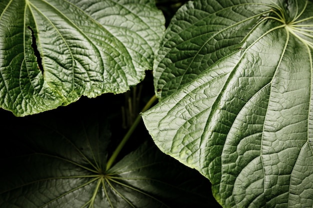 Beautiful tropical leaves closeup