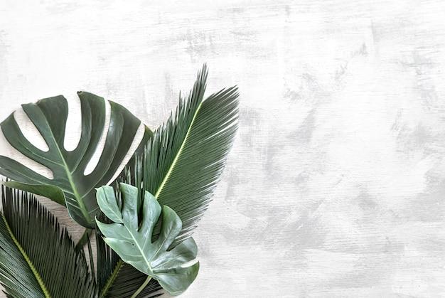 Belle foglie tropicali su bianco.