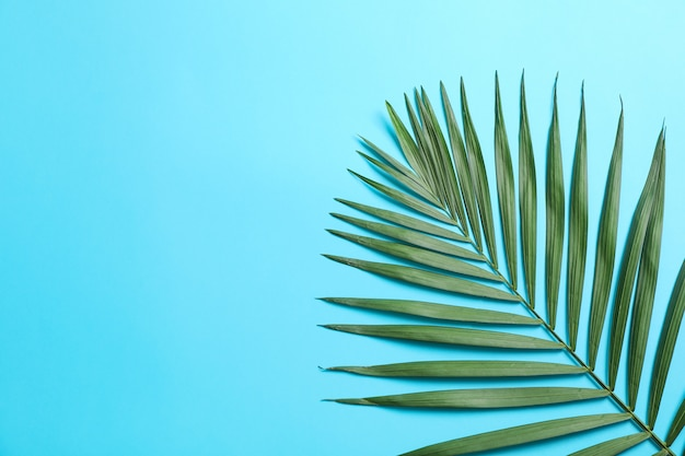 Красивые тропические пальмовые листья на цветном фоне, место для текста