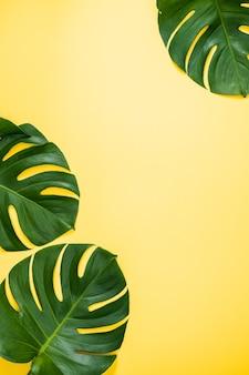 파스텔 노란색 배경에 격리된 아름다운 열대 야자수 몬스테라 잎 가지