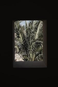 햇빛 그림자가있는 베이지 색 건물 창에 아름다운 열대 야자 식물 나무 잎