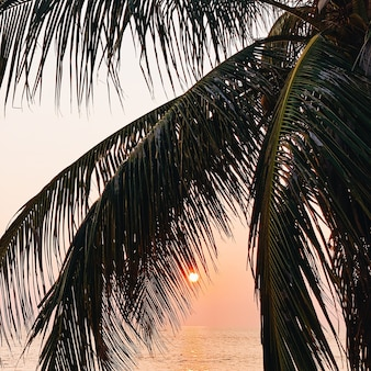 Beautiful tropical palm tree on empty beach with sea at gorgeous warm yellow sunset with deep red sun