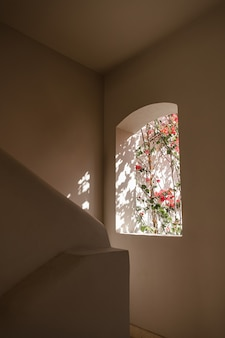 Beautiful tropical plant tree with red flowers in beige building window with sunlight shadows.