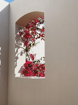 Beautiful tropical plant tree with red flowers in beige building window with sunlight shadows
