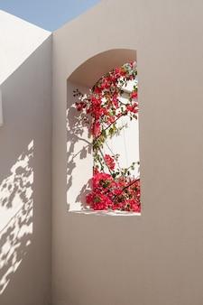 日光の影とベージュの建物の窓に赤い花を持つ美しい熱帯植物の木。