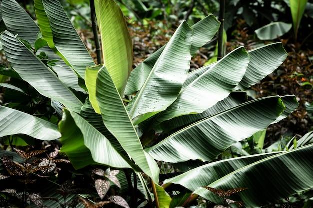 아름다운 열대 식물