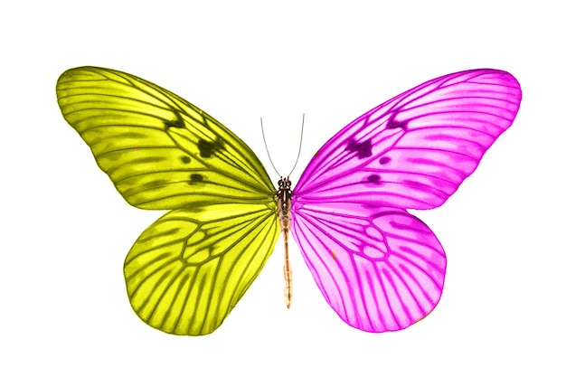 Красивая тропическая желто-фиолетовая бабочка.