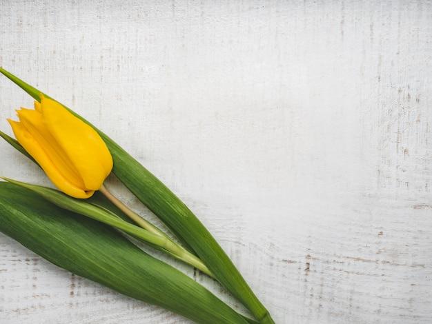 Красивый тюльпан, лежащий на белом столе