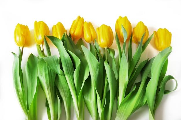 흰색 바탕에 아름 다운 튤립 꽃다발