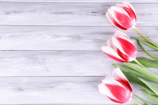 Beautiful tulips on color wooden