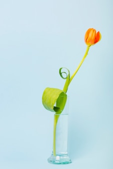 Beautiful tulips in glass beaker filled with water against blue background