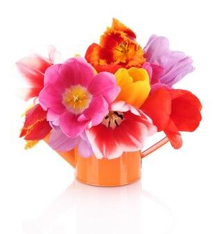 Красивые тюльпаны в букете на белом