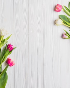Beautiful tulips on white