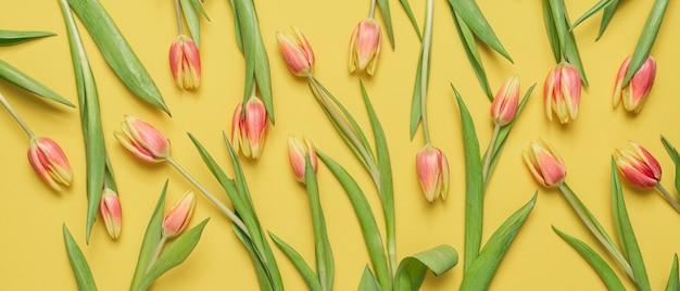 黄色の背景に美しいチューリップ。春の花のクローズアップ。
