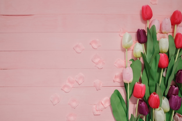 Beautiful tulips on pink background.