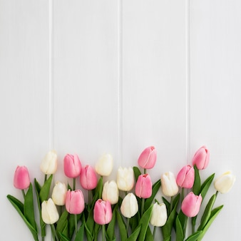 Beautiful tulips white and pink on white wooden background
