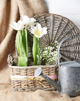 Beautiful tulips in wicker basket, on color wooden background