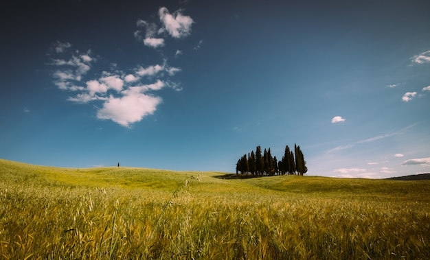 Beautiful tuscan landscape with the cypress wood