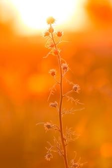 夕日の光の中で植物の美しい小枝