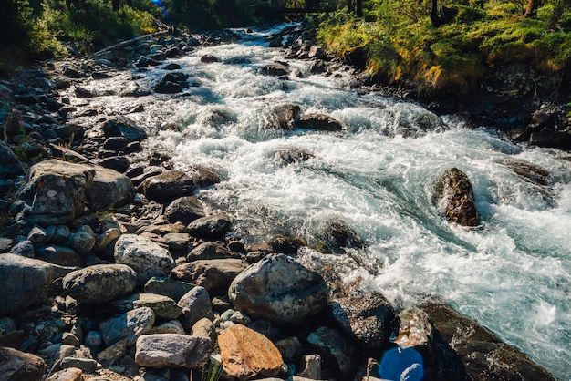 Beautiful vegetation near mountain creek in sunlight. big boulders in fast water stream close-up. background of rapids of river in sunny day. fast flow near wet stones. rich flora of highlands.