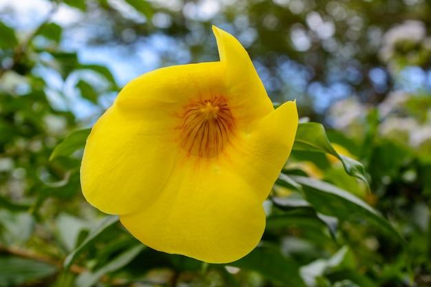 싼야(sanya) 시의 유명한 열대 바이 루공 위안 공원(bai lu gong yuan park)에 있는 아름다운 초목, 나무, 꽃, 호수, 연못. 중국 하이난 섬.