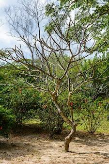 三亜市の有名な熱帯白鷺公園の美しい植生、木、花、湖、池。海南島、中国。
