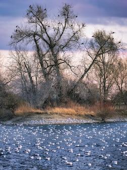 오리와 백조가 물 위를 헤엄치는 아름다운 수직 샷과 나무에 앉은 까마귀