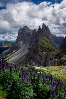 Красивый вертикальный снимок цветов с камнями рядом, природный парк пуэц-гейслер, италия