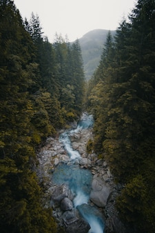 Beautiful vertical shot of a river flowing in between trees and stones