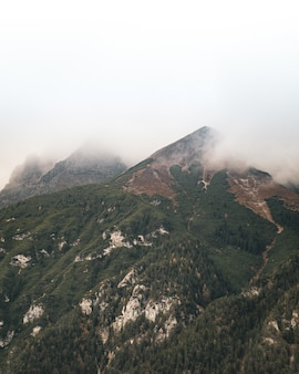 Beautiful vertical shot of the summit covered with forest trees and fog on the top of it