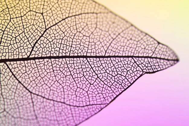 Beautiful vibrant transparent fall leaf