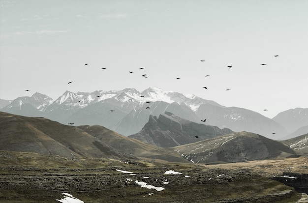 Beautiful view of birds flying over mountains on a gloomy day